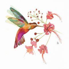hummingbird-love-flor-composta-