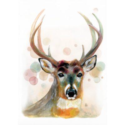 cervol-de-rosabella