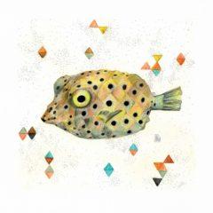 peix-cofre